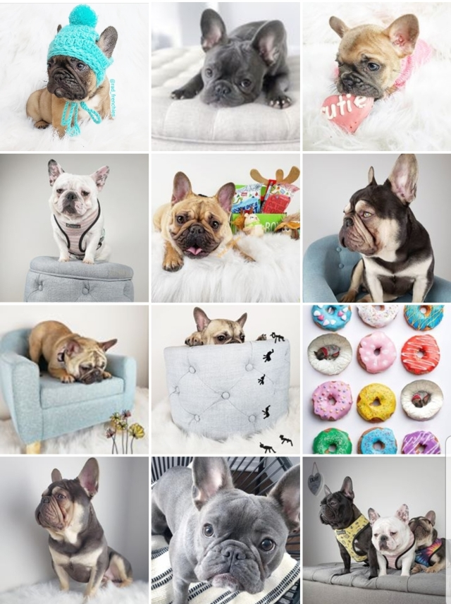 french bulldogs to follow on instagram - how to get more
